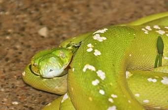 Un bărbat din Cluj a furat mai multe reptile dintr-un vivariu, printre care și un șarpe Boa Curcubeu Citeşte întreaga ştire: Un bărbat din Cluj a furat mai multe reptile dintr-un vivariu, printre care și un șarpe Boa Curcubeu