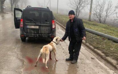 Amendă de 1.000 de lei pentru șoferul din Sibiu care și-a scos câinele la plimbare legat de cârligul mașinii Citeşte întreaga ştire: Amendă de 1.000 de lei pentru șoferul din Sibiu care și-a scos câinele la plimbare legat de cârligul mașinii